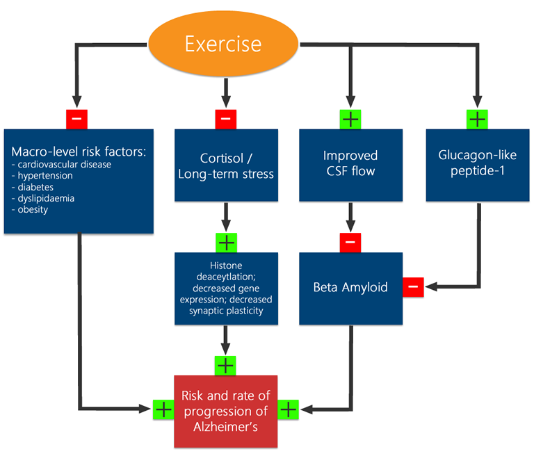 effects exercise cardiovascular system essay