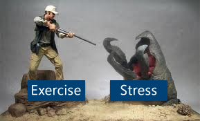 Exercise combats stress